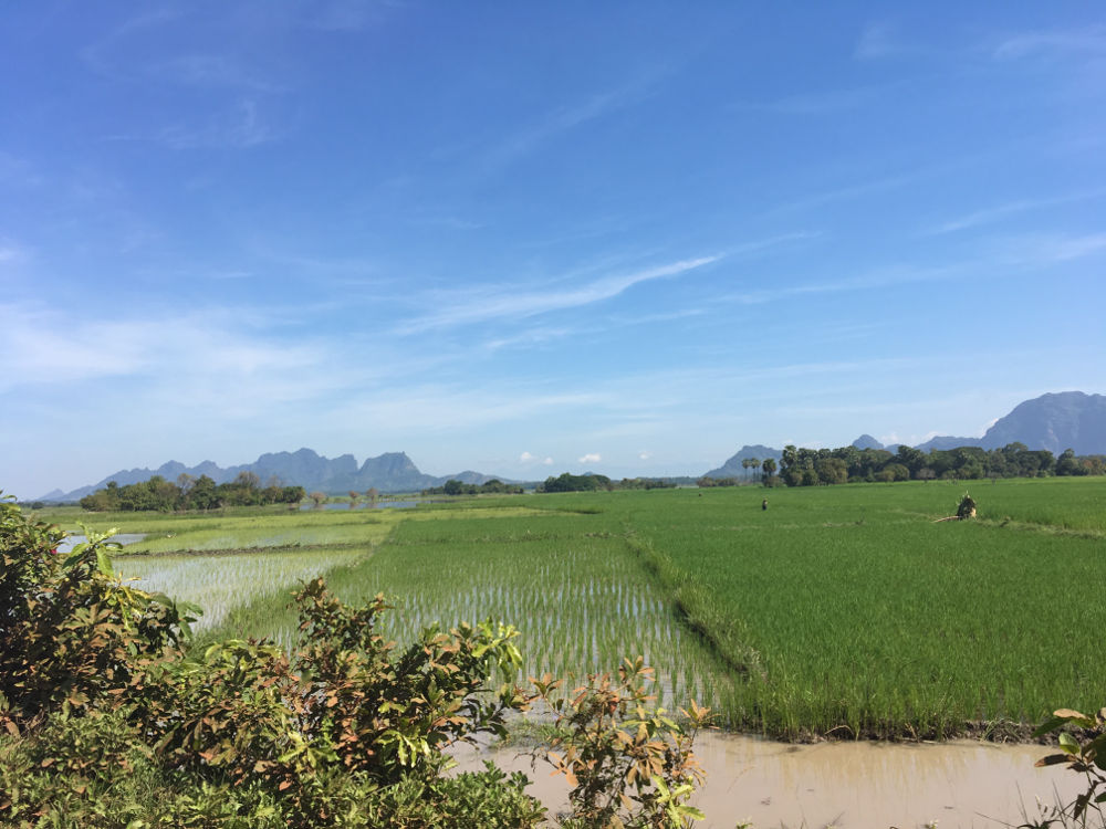 Reisfeld bei Hpa-an