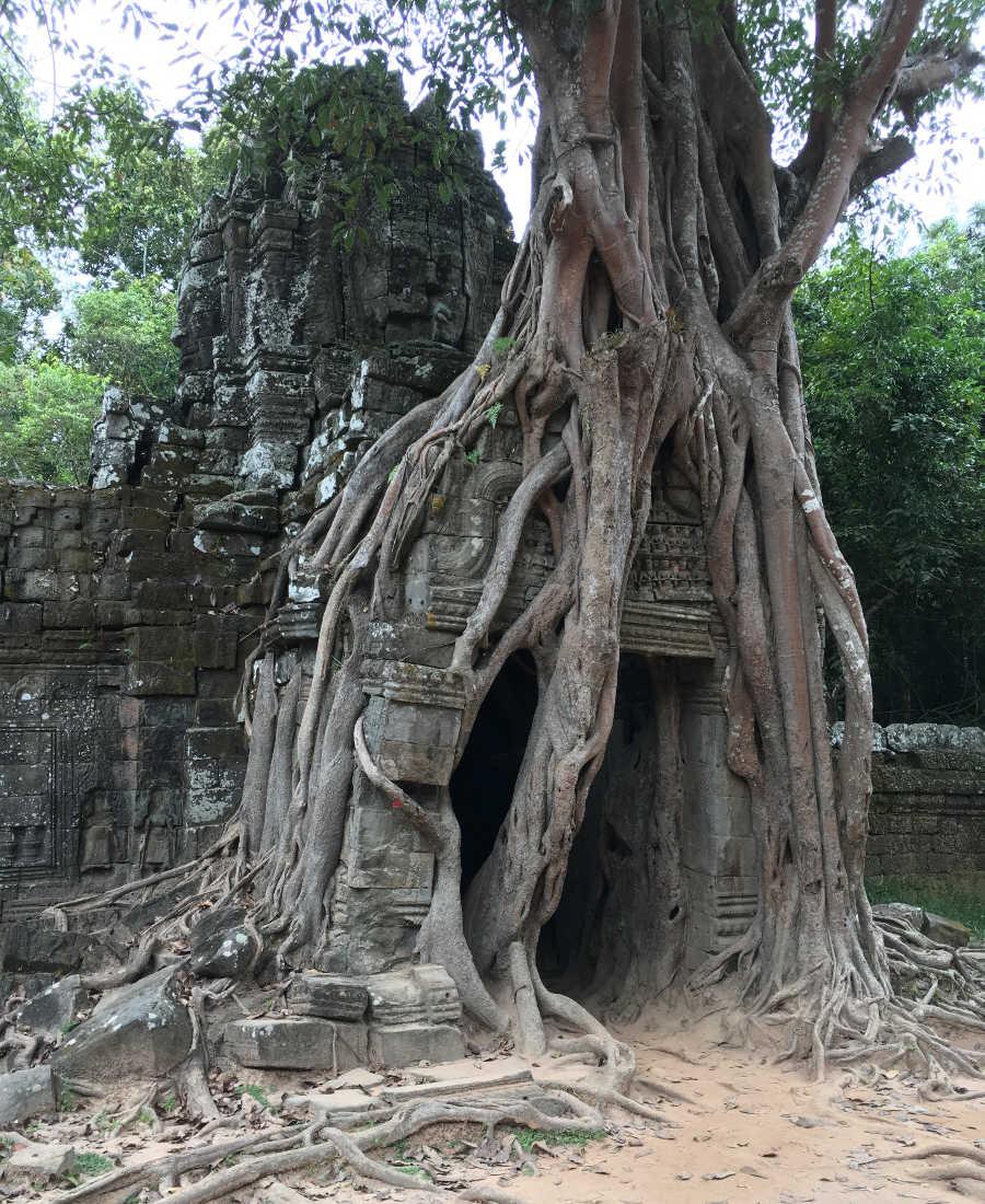 Dschungel frisst Tempel