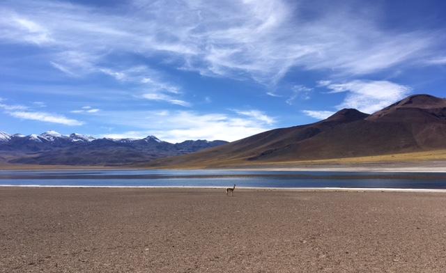 Atacama Desert: Lagune