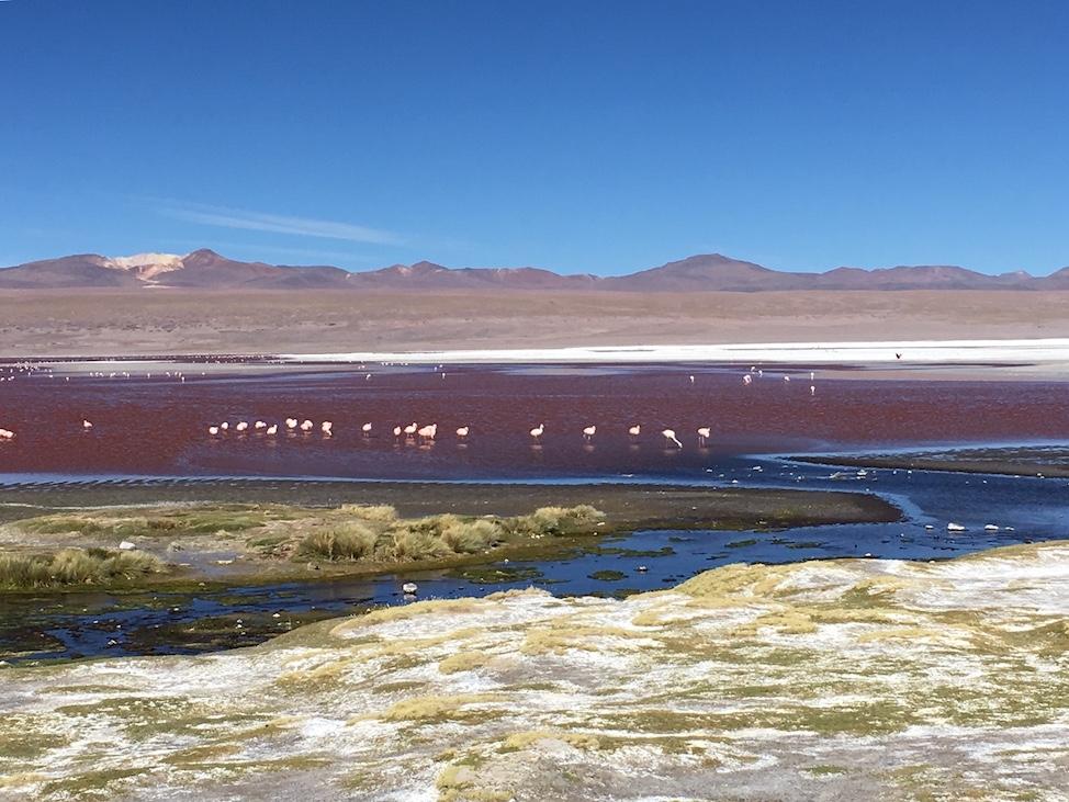 Uyuni-Tour: Flamingos in der Laguna Colorada, die neben rot auch blau und gelb schimmert.