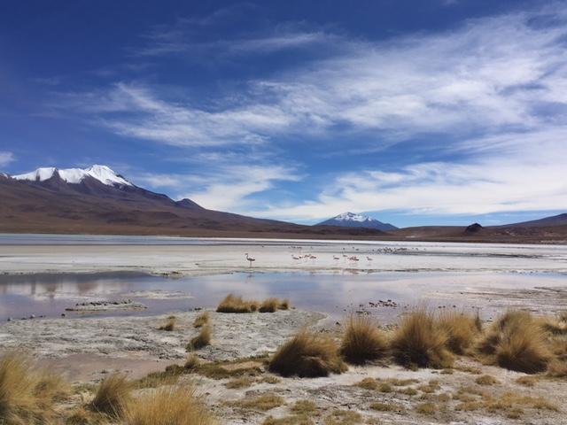 Nochmal die Laguna Colorada umgeben von Vulkanen.
