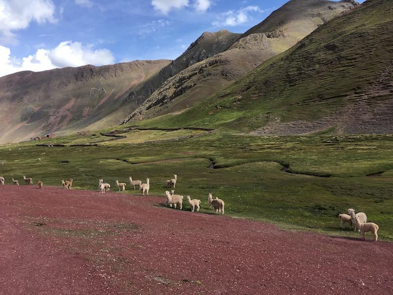 Im Valle Rojo, ich mag die rot-weiß-grün-Kombi