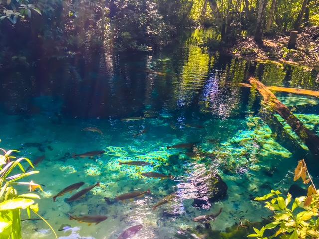 Bom Jardim: In diesem Fluss geht es gleich zum Schnorcheln.
