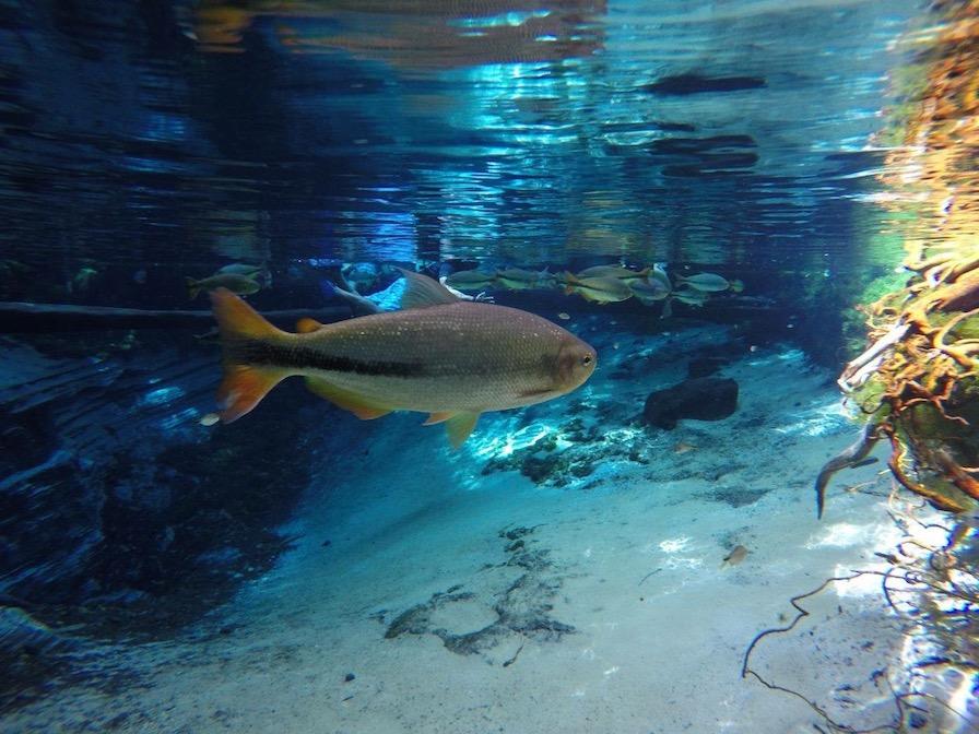 Bom Jardim: So sieht es dann unter Wasser aus.