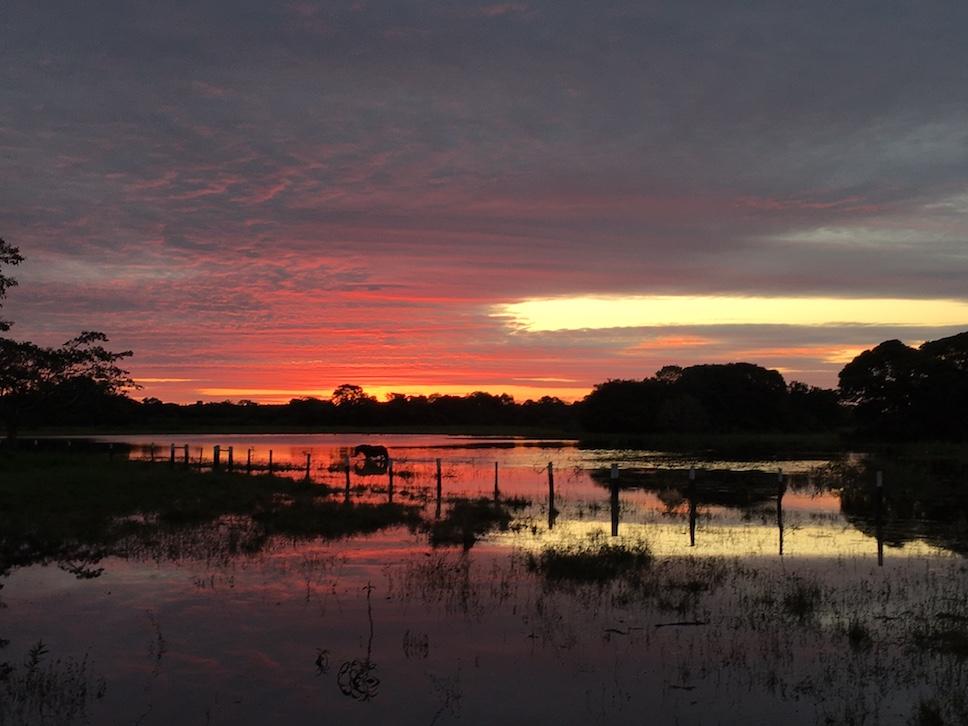 Pantanal: Noch röter.