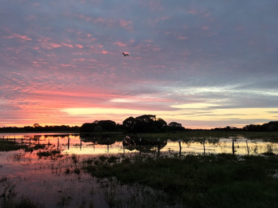 Pantanal: Und so rot wird es danach.
