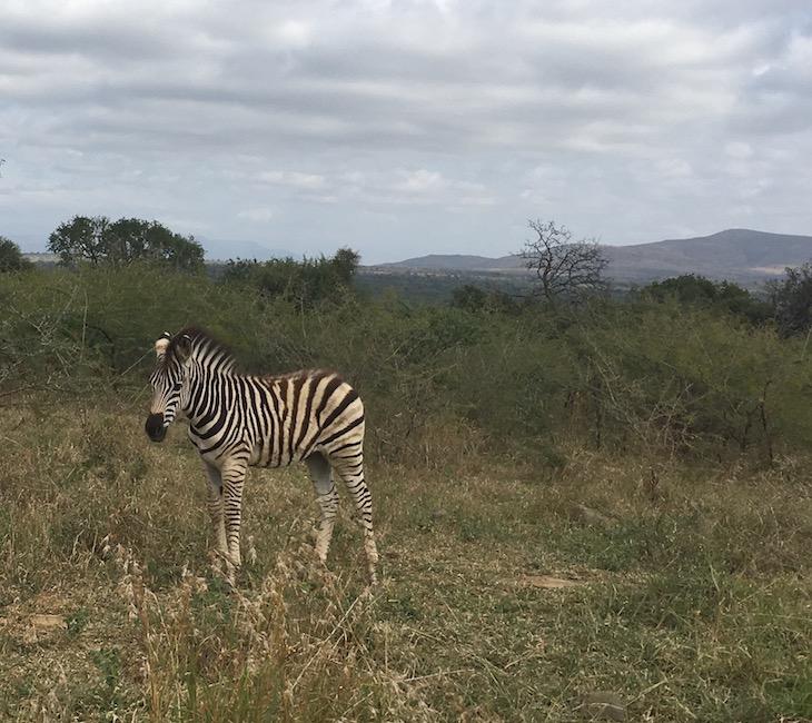 Im Hluhluwe-iMfolozi-Nationalpark
