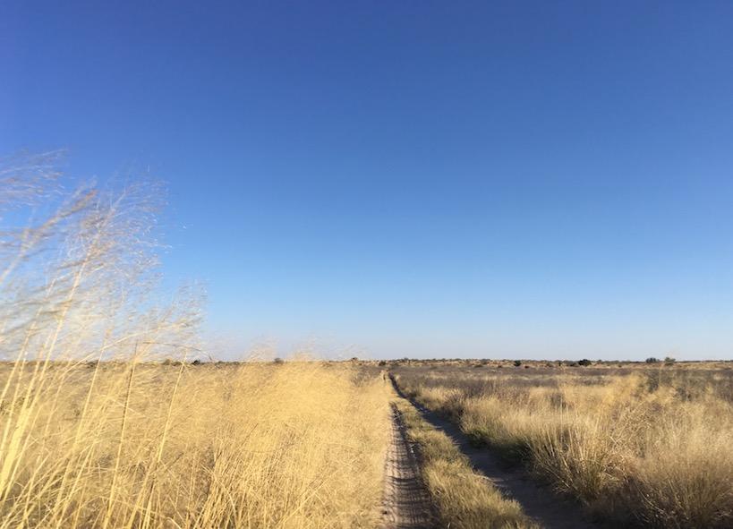 Auf dem Weg ins Central Kalahari Game Reserve (CKGR)