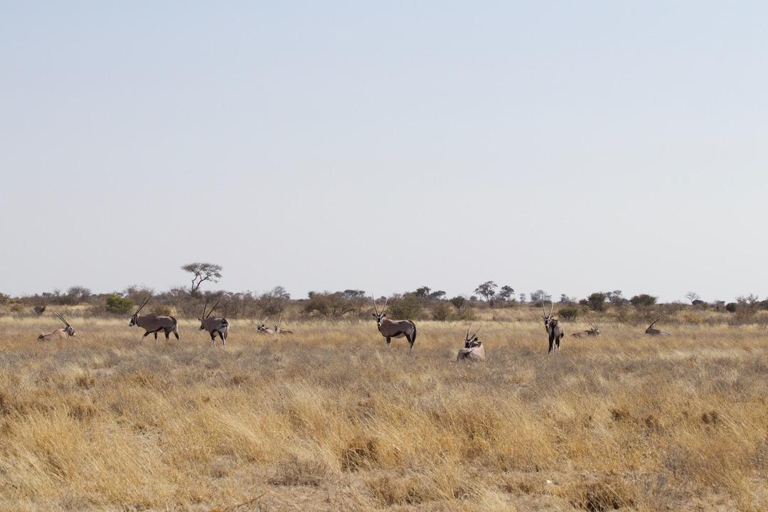 Kalahari GR