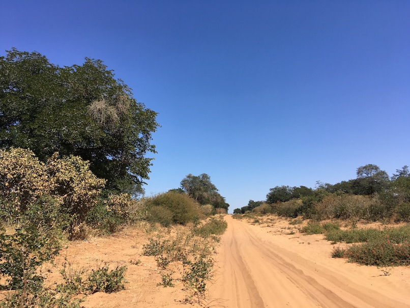Chobe National Park – der ganze Park ist voller Sand