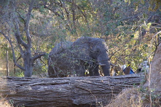 Am Abend dann ein Elefant, der quer über unseren Camping-Platz latscht.